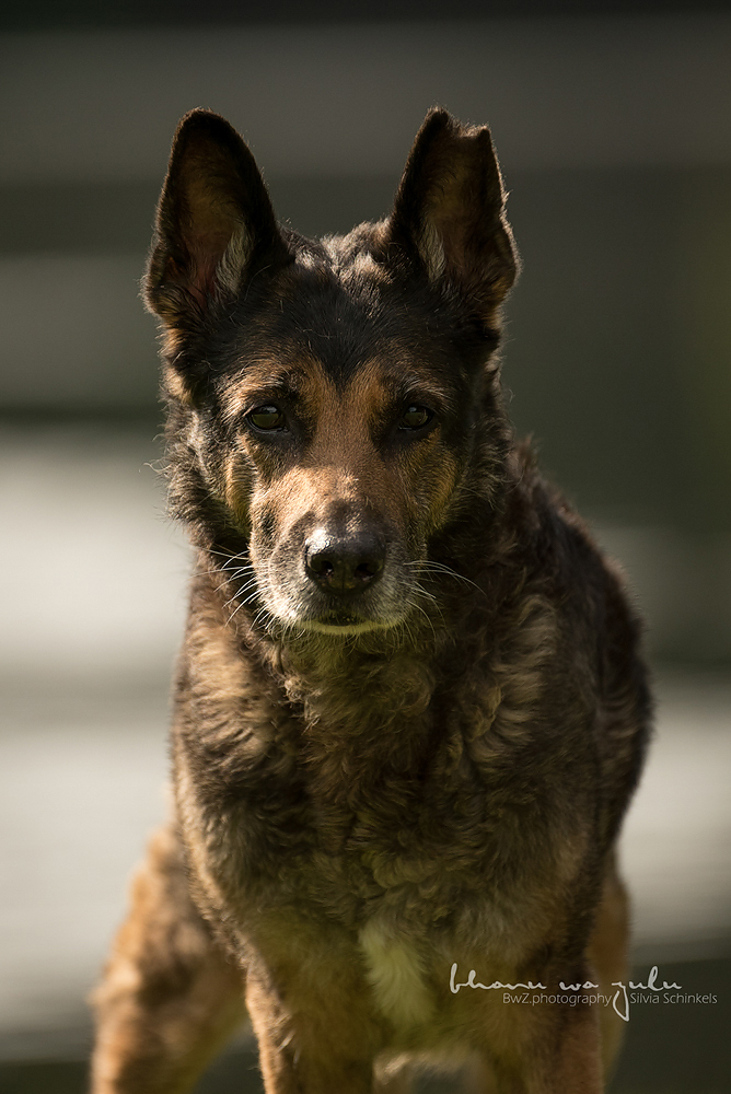 Beispielbilder Hundefotos Sandras Maus