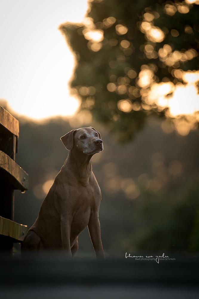 Beispielbilder Hundefotos Bhanu Brücke