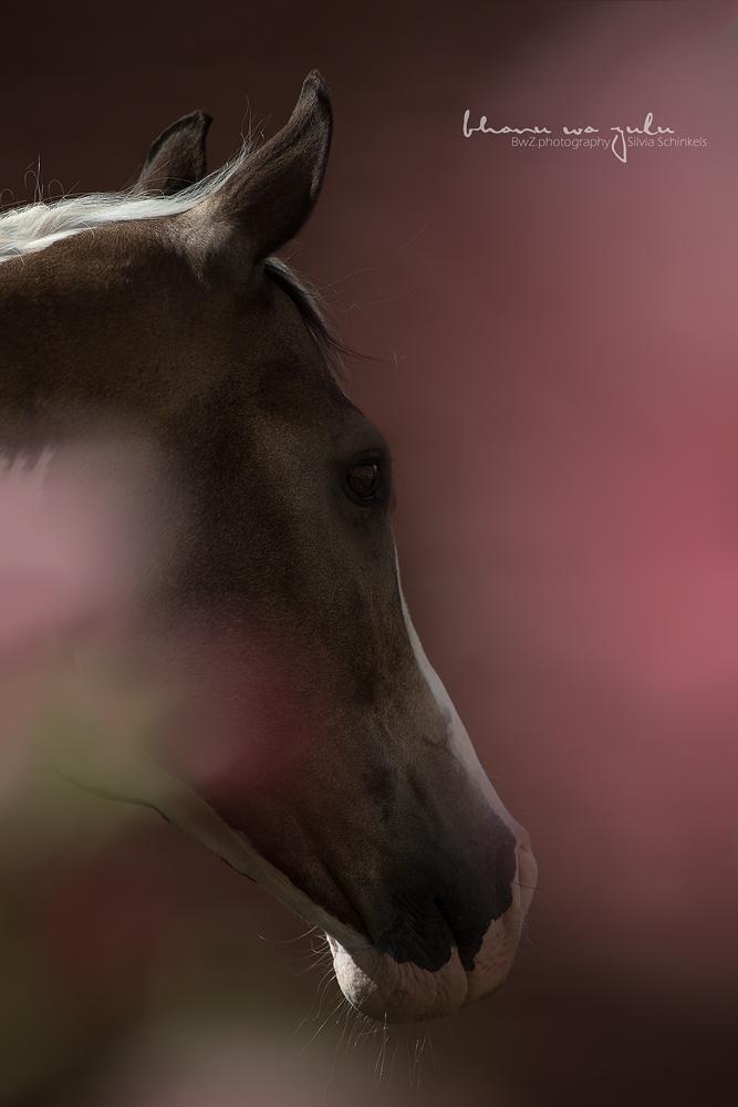Bilder Pferdefotoshooting