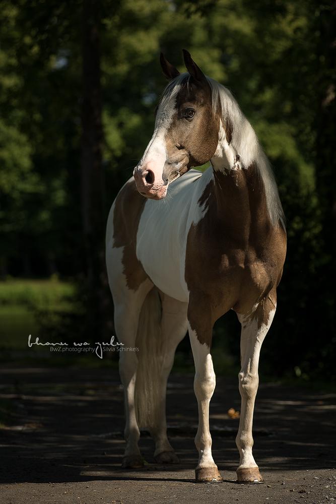 Tierfotografie nrw | Silvia Schinkels | BwZ.photography | based in 47906 Kempen | Hundefotografie, Pferdefotografie