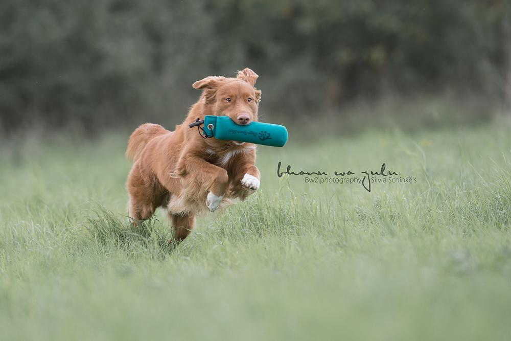 Beispielbilder Hundefotos Dummywt
