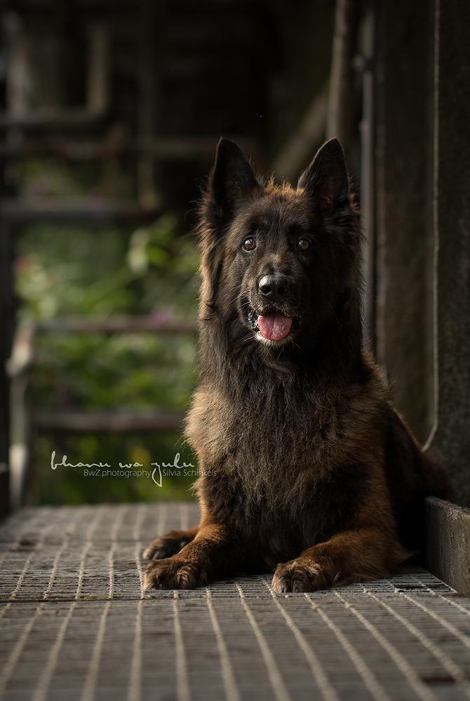 Portfolio Hund