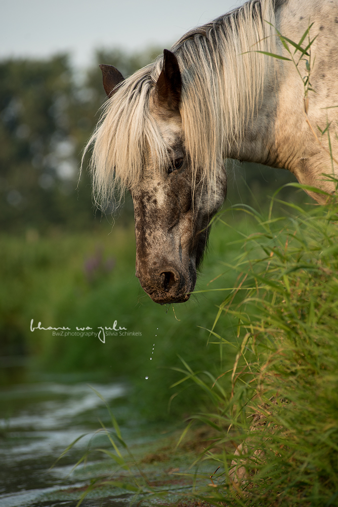 BwZ.photography Pferd