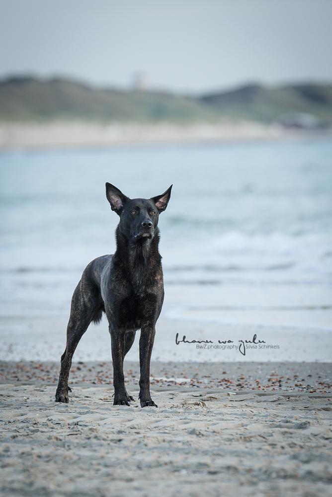 Beispielbilder Hundefotos Strand schwarzer Heerder