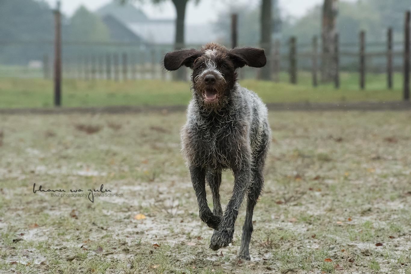 Beispielbilder Hundefotos Mali