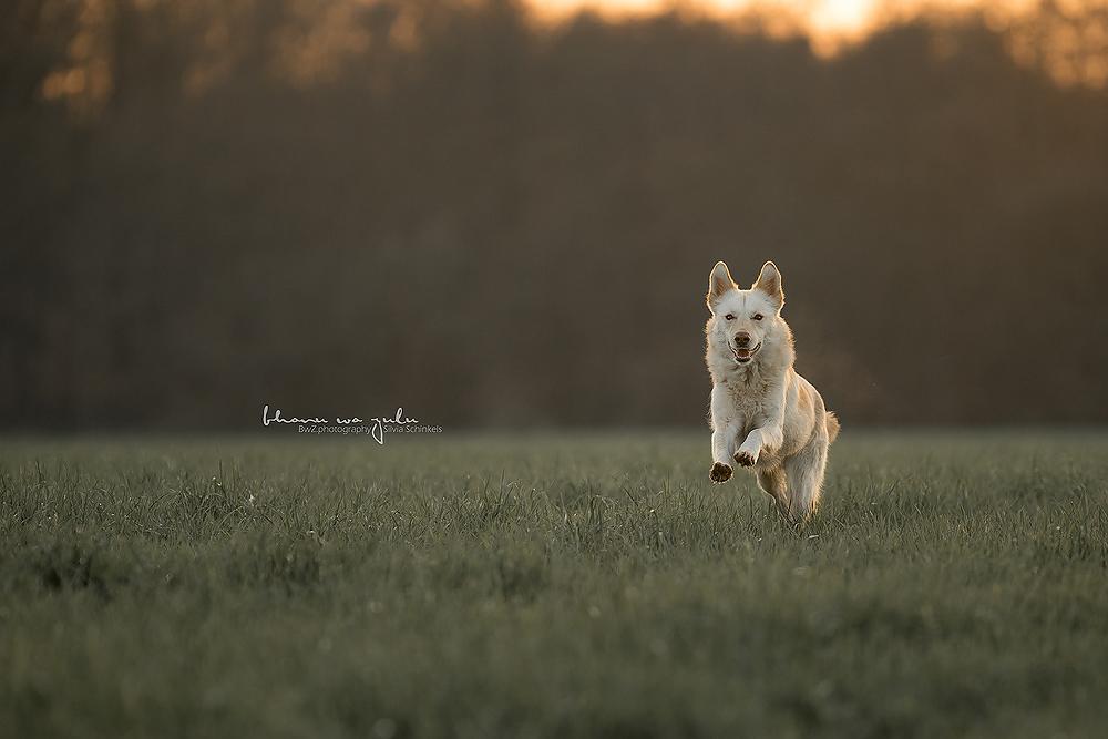 Beispielbilder Hundefotos Günther Hund