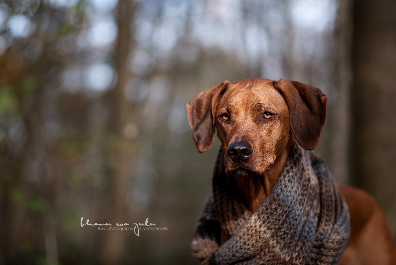 Beispielbilder Hundefotos Eywa Schal