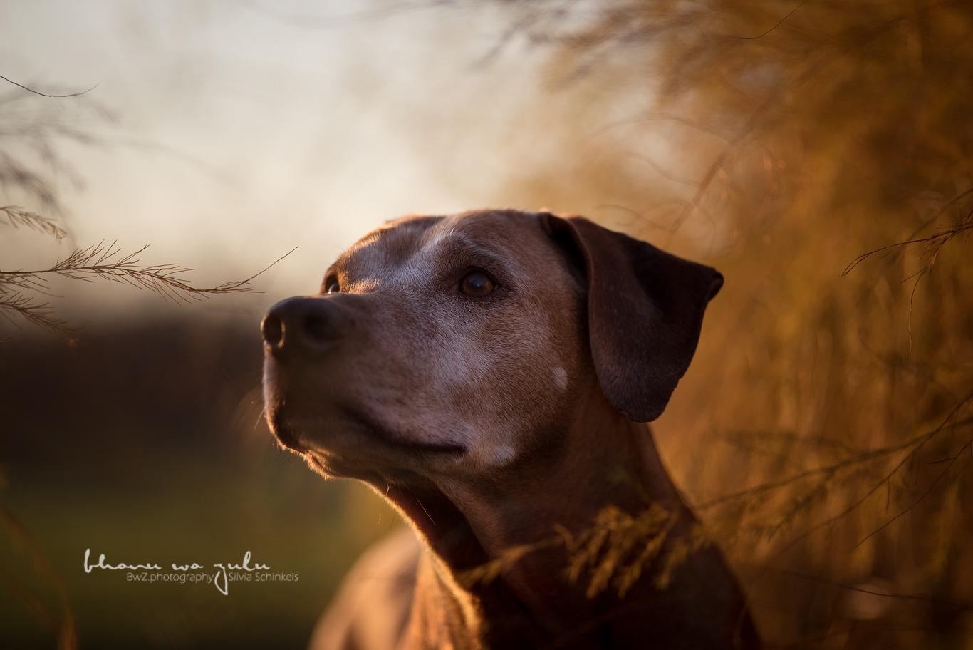 Tierfotografie nwr by BwZ.photography, Equipment