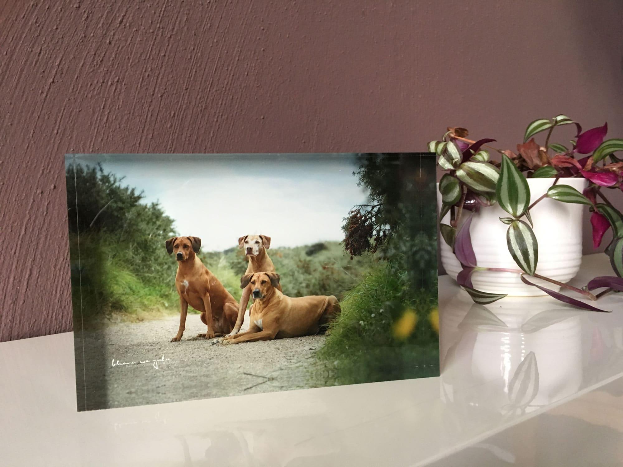 Geschenk, Block aus Acryl mit Foto dahinter
