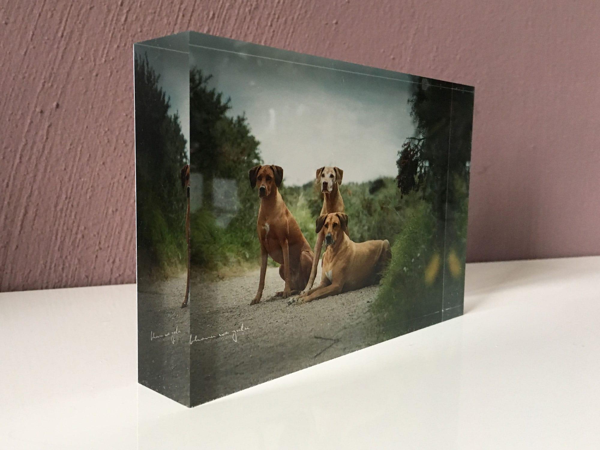 Tierfotografie BwZ. am linken Niederrrhein, Acryl Block zum hinstellen