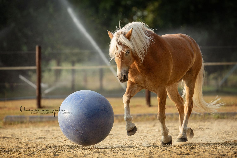 Portfolio Pferd Tierfotografie nrw
