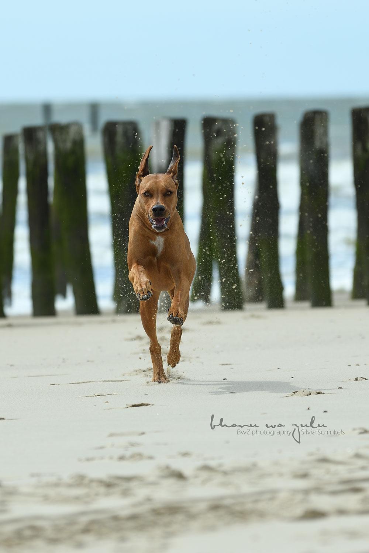 Hundefotografie am Meer
