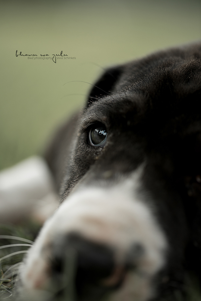 Hundefotografie Welpen