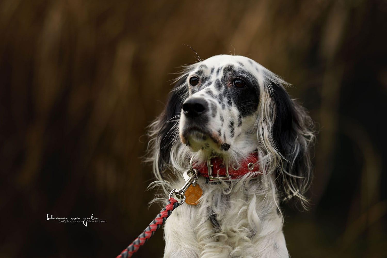 Beispielbilder Hundefotos Ares