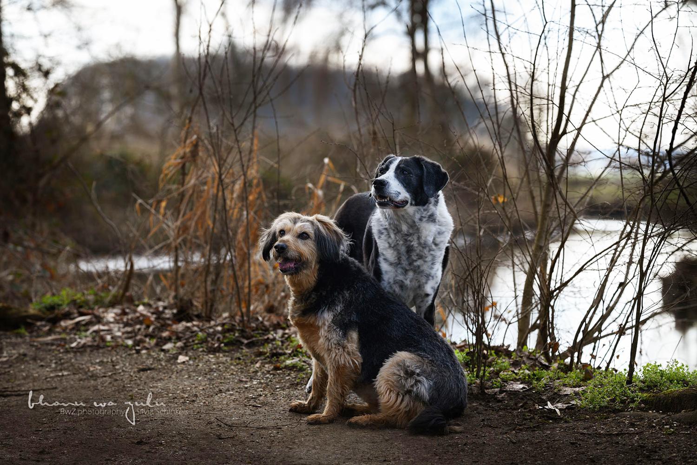 Hundefreunde am Niederrhein