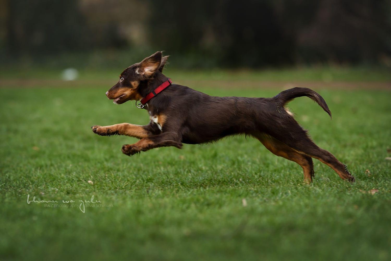 Beispielbilder Hundefotos Bheko Wald