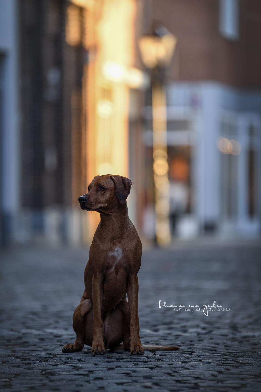 Stadtpfoten Kempen, BwZ.photography, Hundefotografie nrw