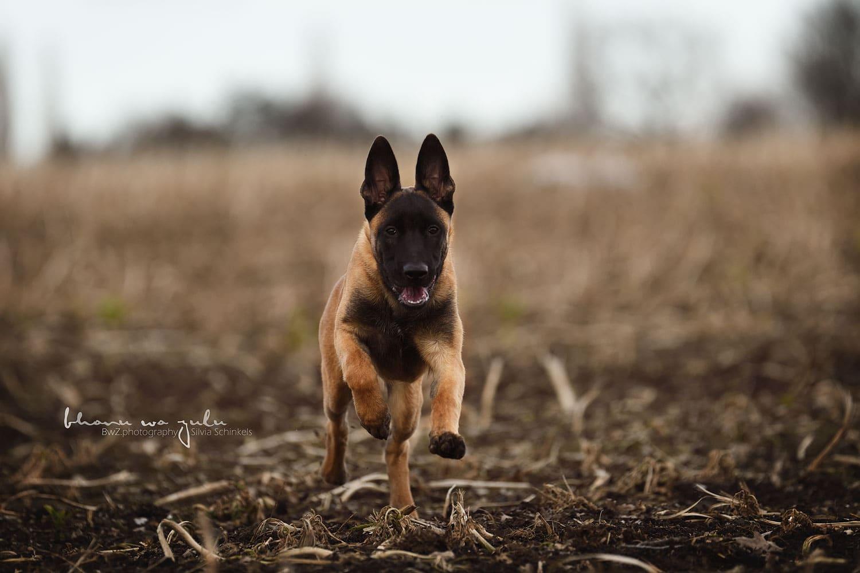 Hundefotografie Beispielbild