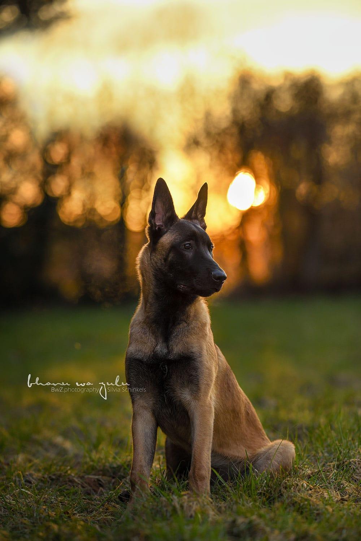 Beispielbilder Hundefotos Lasko