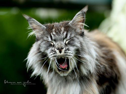 | Katzenfotografie