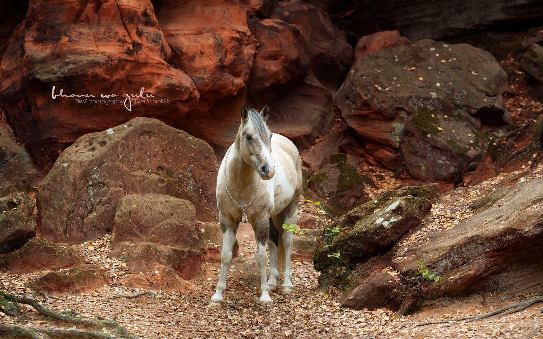 rote Felswand, BwZ.photography, Ponyfotografie