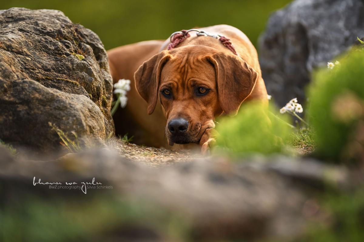 Beispielbilder Hundefotos Shari