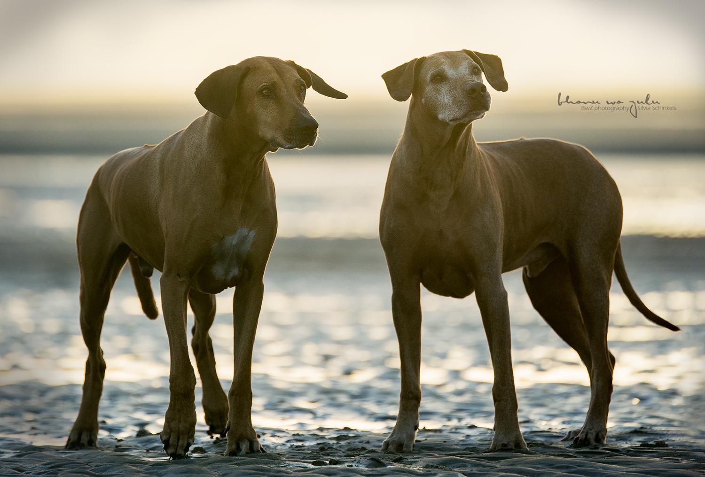 Beispielbilder Hundefotos Jungs am Strand