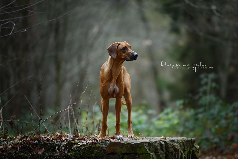 Portfolio Tier-Mensch-Bindung