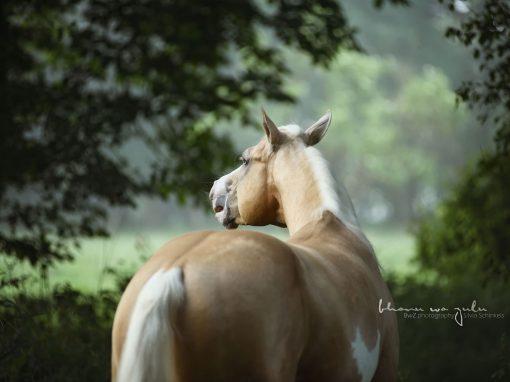 | Pferdefotografie outdoor