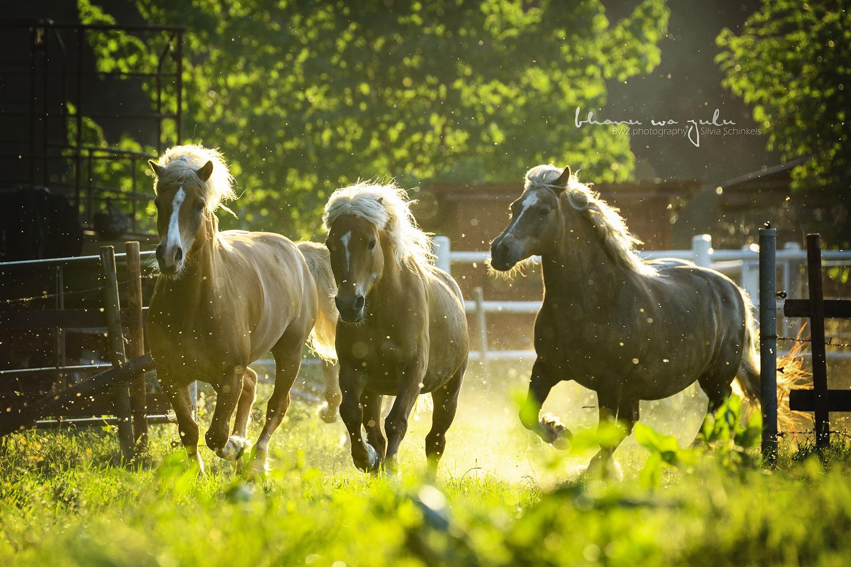 Ponyaction