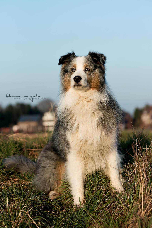 Beispielbilder Hundefotos Monty