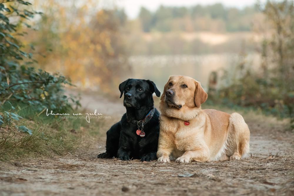 Beispielbilder Hundefotos, Reindersmeer