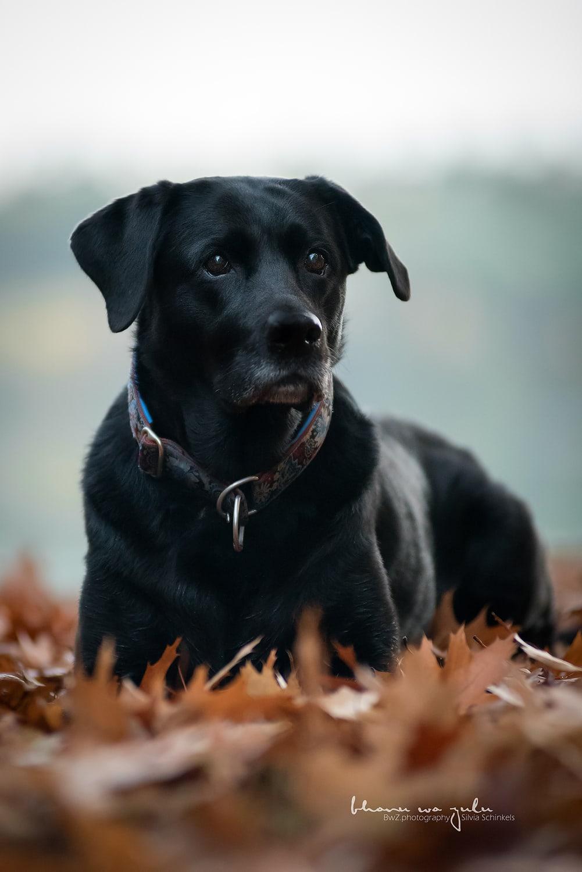 Beispielbilder Hundefotos Doggenbaby