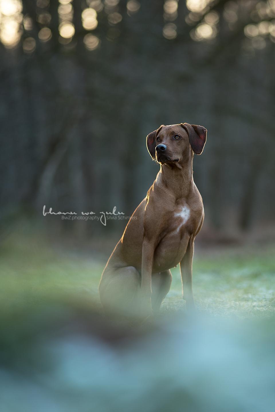 Beispielbilder Hundefotos Eywa Eis