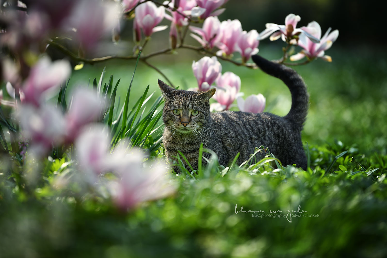 Katzenfotografie nrw