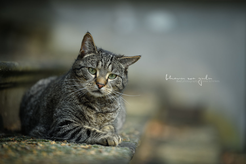 Beispielbilder Hundefotos Frieda