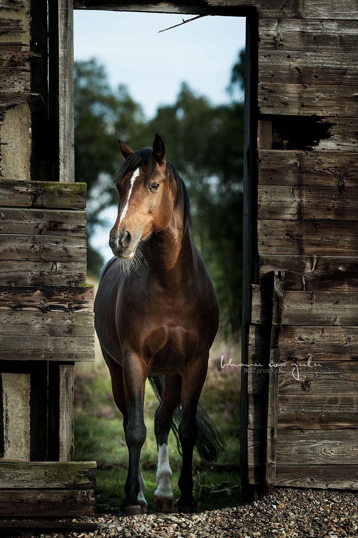 Pferdefotografie nrw