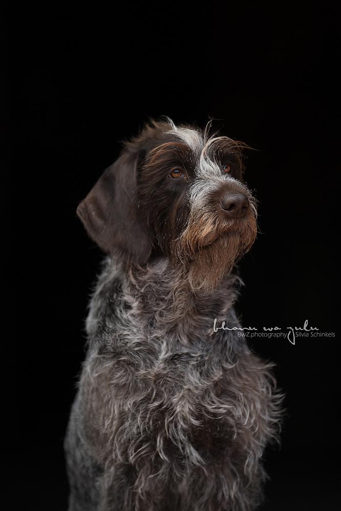 Beispielbilder Hundefotos Mali schwarz