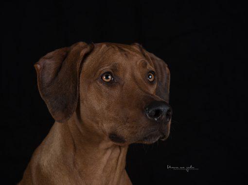 | Hunde im Studio