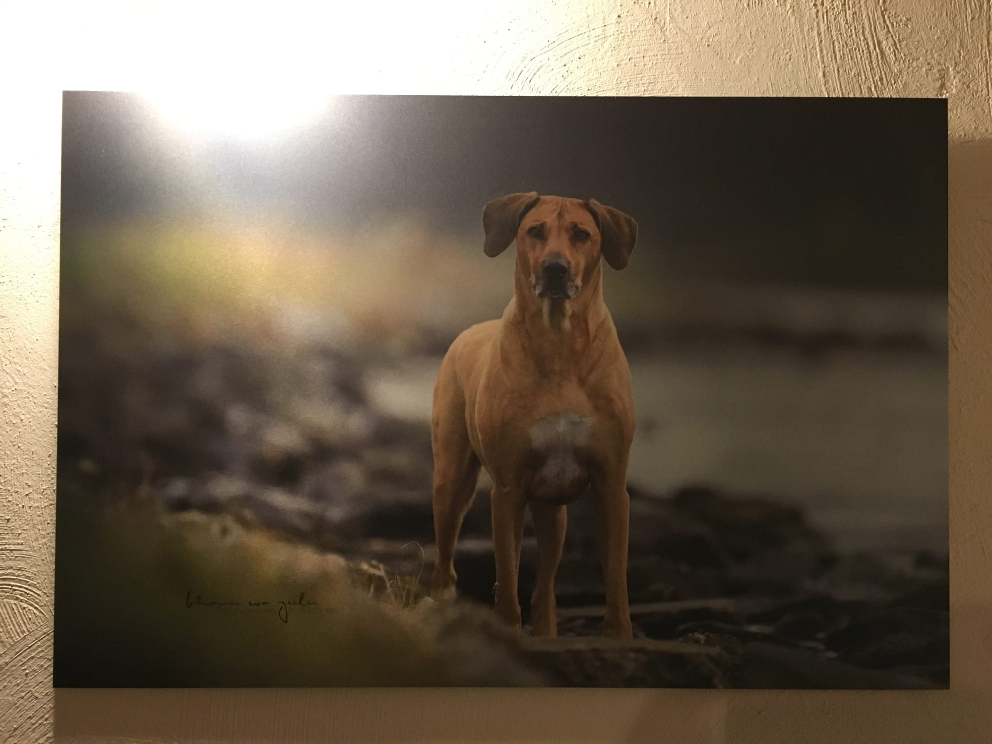 BwZ.photography Tierfotografie Wandbild