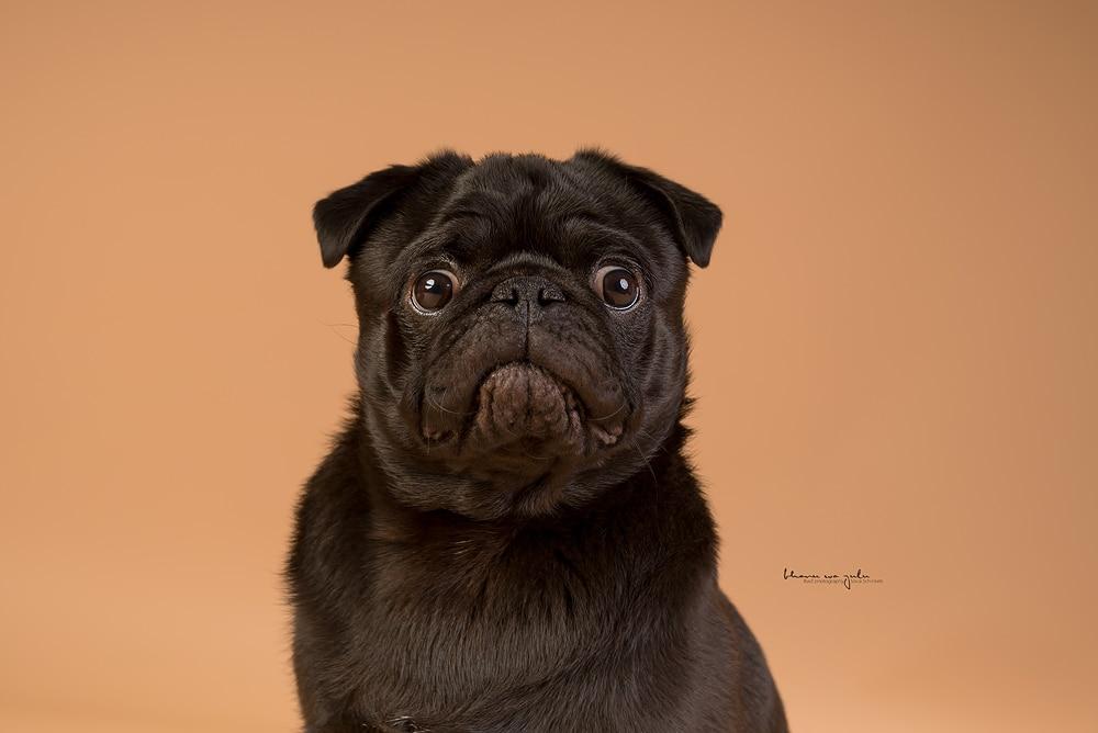 Beispielbilder Hundefotos Studio